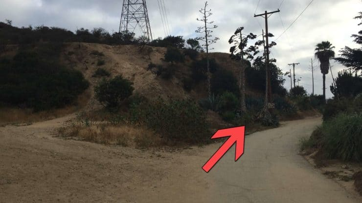 Trail Junction At Runyon Canyon Road