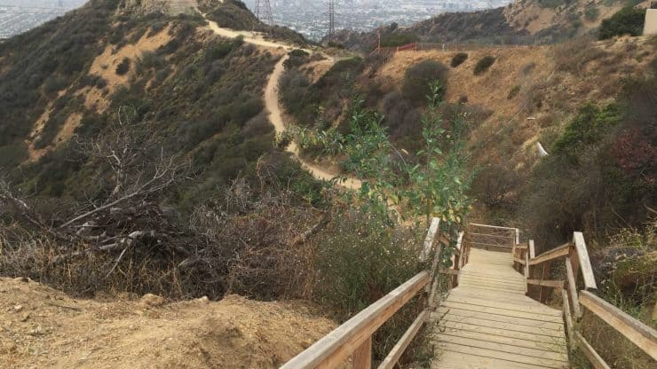 Stairs In Runyon Canyon Park