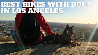5 Best Hikes With Dogs in Los Angeles