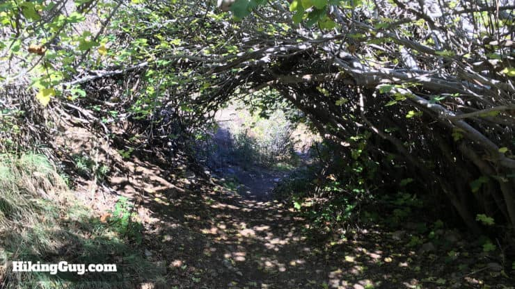 alders and oak on holy jim trail