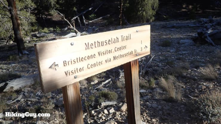 Methuselah Walk