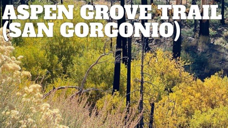 Big Bear Aspen Grove Trail Hike