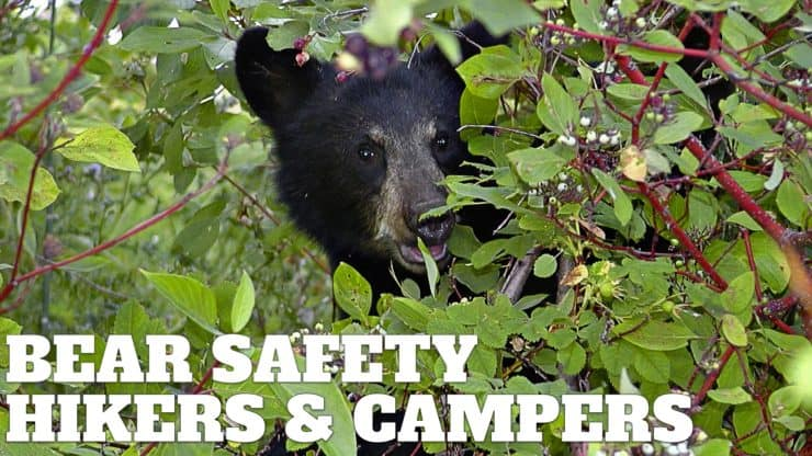 Easy Bear Safety For Hikers and Campers