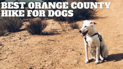 Best Orange County Hikes With Dogs