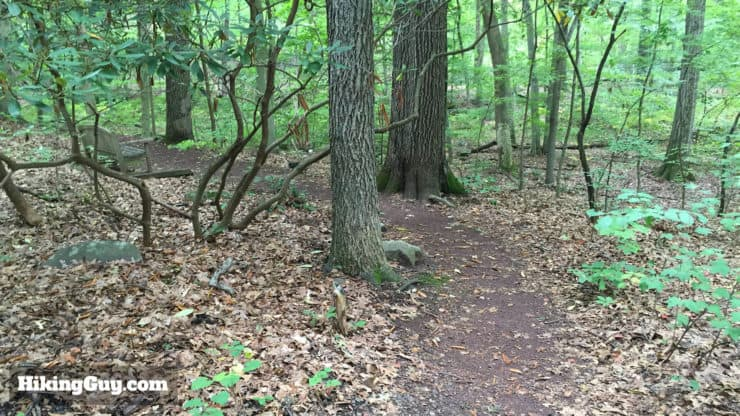 Medicinal Trail