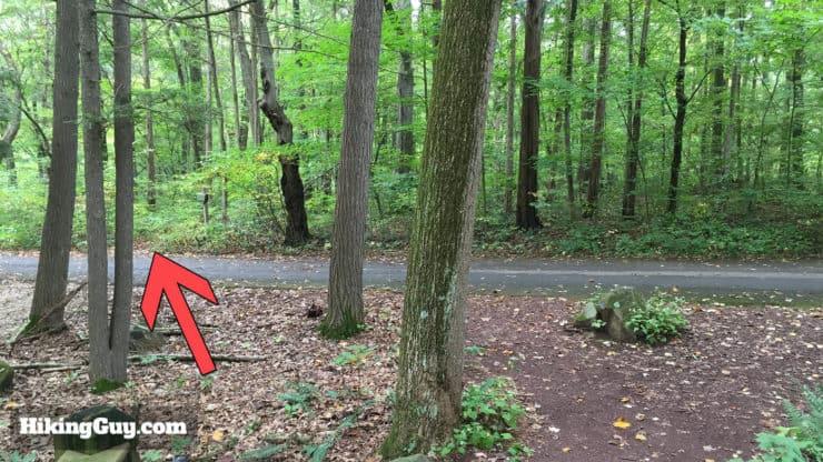 Fern Trail