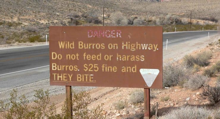Burros Sign Red Rocks