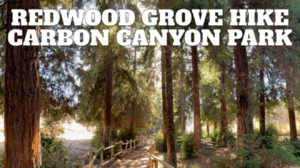 Redwood Grove Hike Guide (Carbon Canyon – Brea)