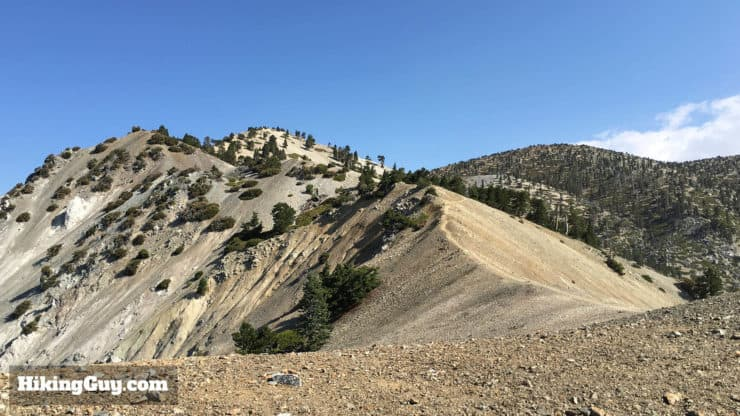 fire damage on bear canyon trail to mt baldy