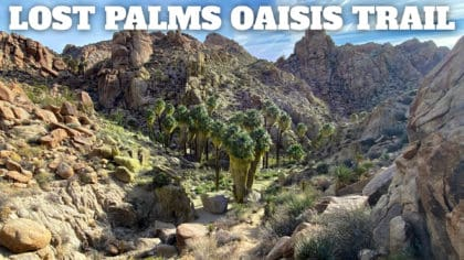 Hike Lost Palms Oasis Trail