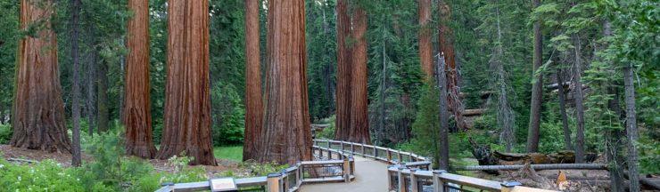 Hike Mariposa Grove Trail Yosemite