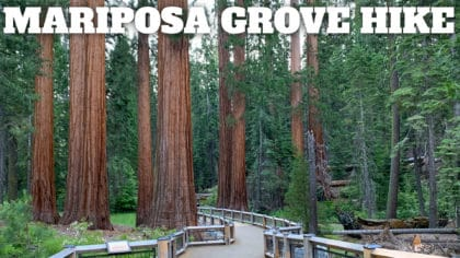 Mariposa Grove of Giant Sequoias Hike Guide