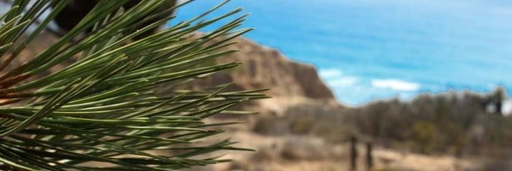 Torrey Pines Hike