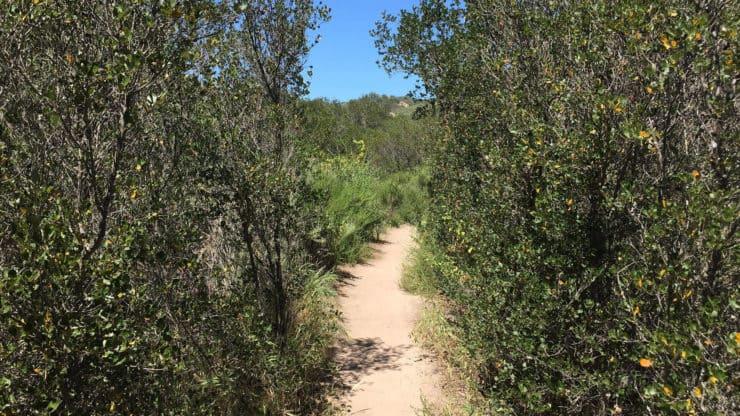 Laguna Coast Wilderness Park Hike trail