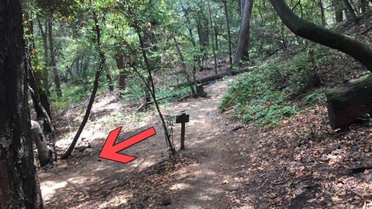 Lower Winter Creek Trail