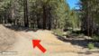 Mount Pinos Hike Directions 6