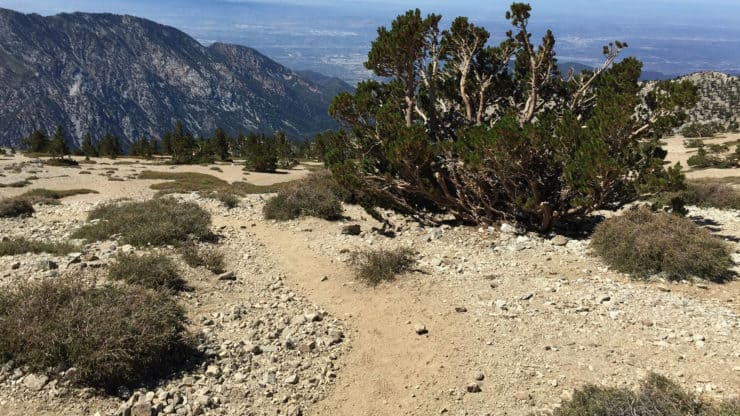 mt baldy hike trail