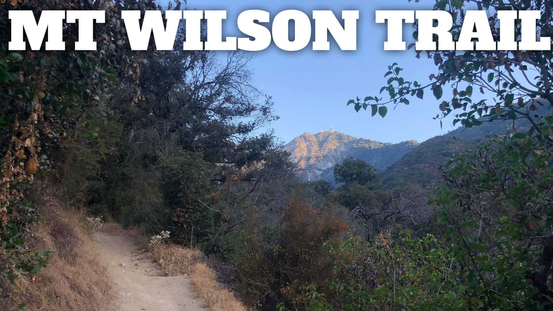 Mt Wilson Trail Hike