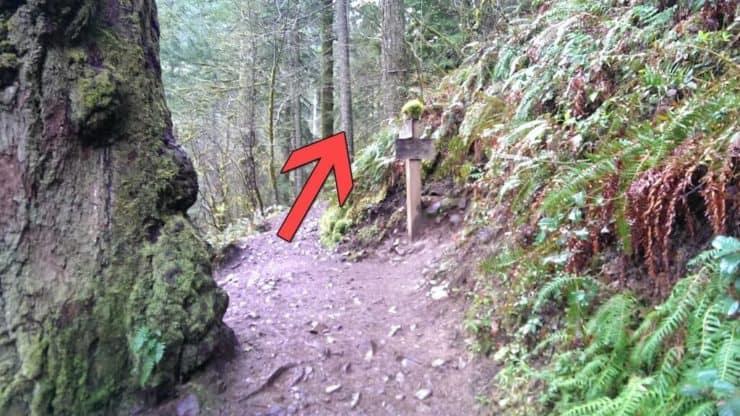 Oneonta Trail #424