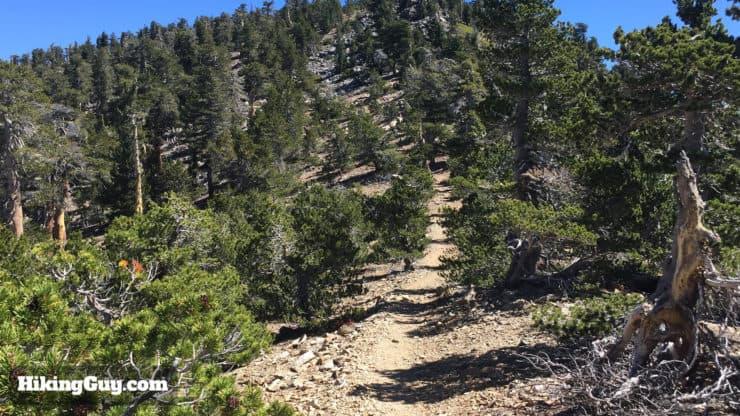San Bernardino Peak Hike trail