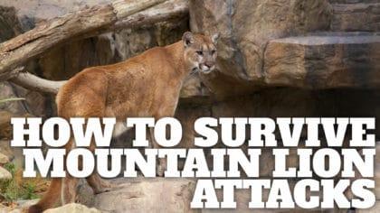 Understanding Mountain Lions When Hiking