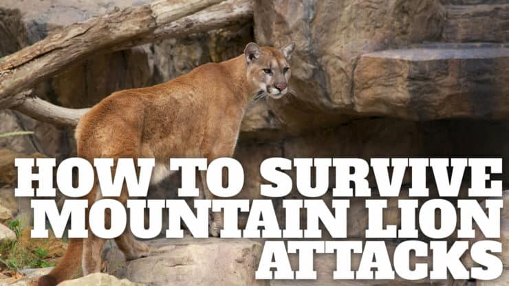 Understanding Mountain Lions When Hiking