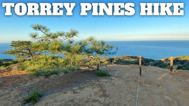 Torrey Pines Hike Guide