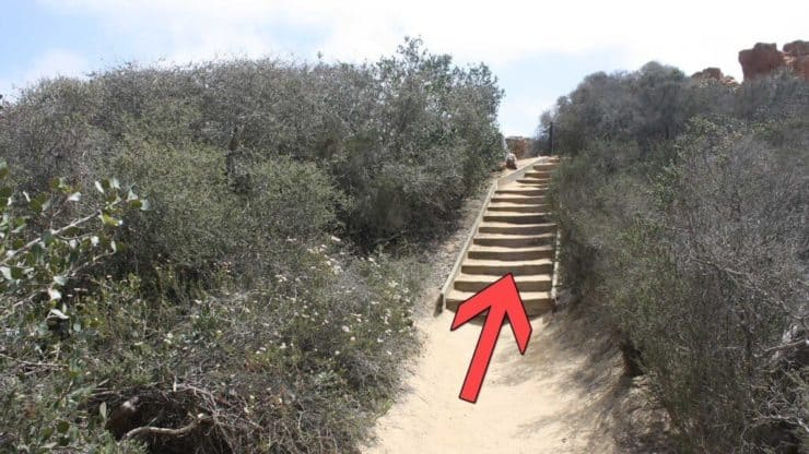 Torrey Pines Hike stairs