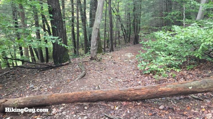 trail to Tohickon Creek