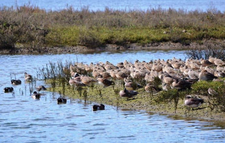 Upper Newport Bay Ecological Reserve Birds