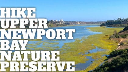 Upper Newport Bay Nature Preserve Hike