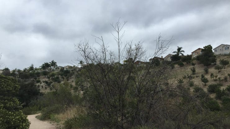 Whiting Ranch Hiking trail