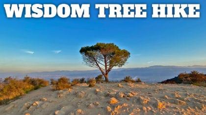 Wisdom Tree Hike (+ Cahuenga Peak and Hollywood Sign)